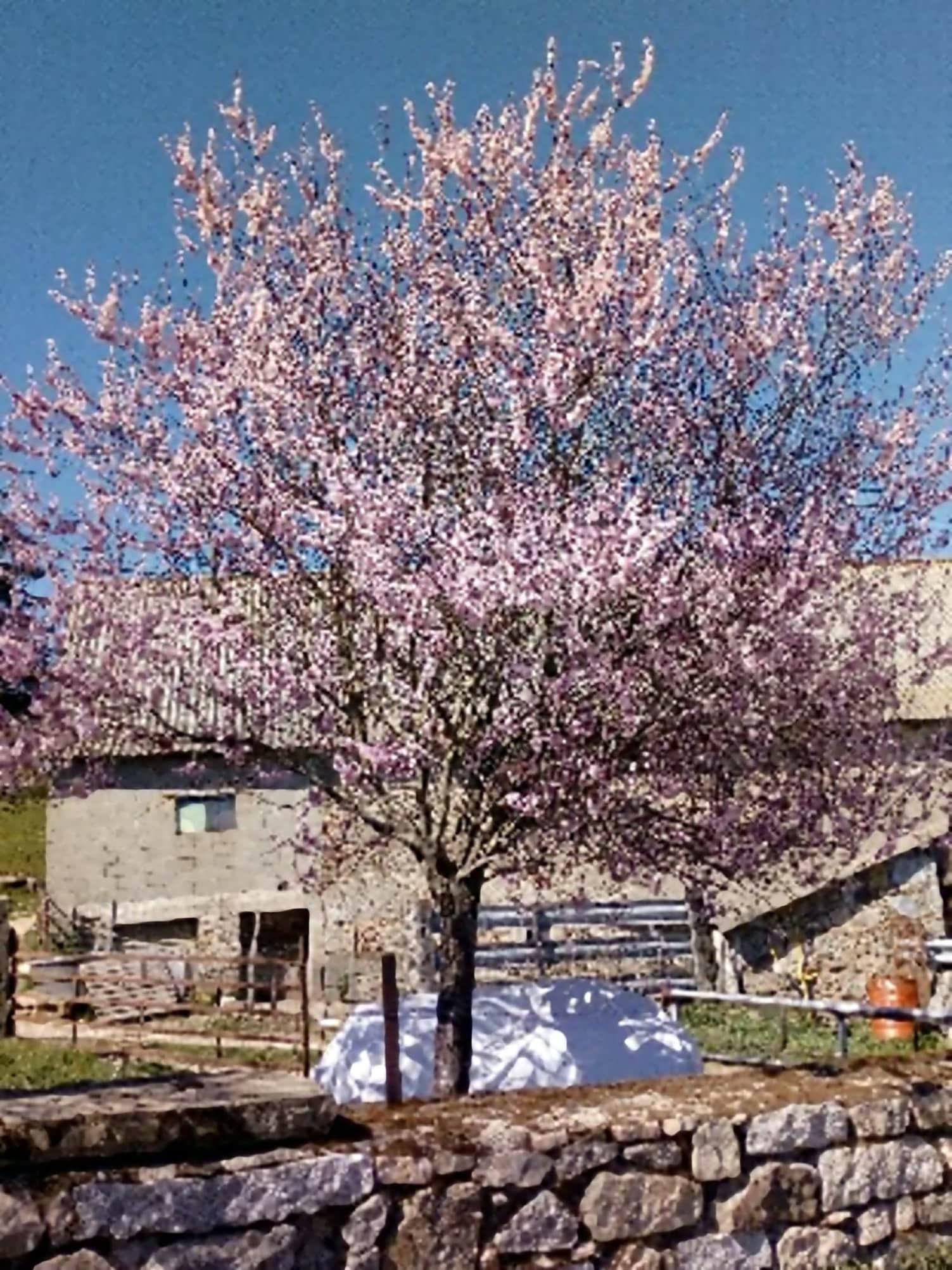 Le printemps s'installe, toujours rempli de promesses et c'est l'éveil de la terre.